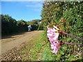 WV4573 : Little Sark - Rue de la Coupee by Colin Smith